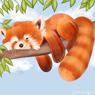 Day 27-red panda